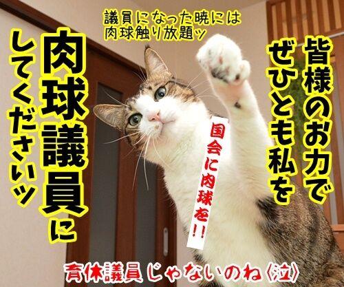 ゲス不倫議員は辞職しちゃったね 猫の写真で4コマ漫画 4コマ目ッ