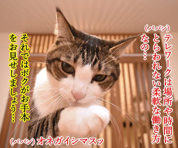 テレワークって最近よく聞くわよねッ 猫の写真で4コマ漫画 3コマ目ッ