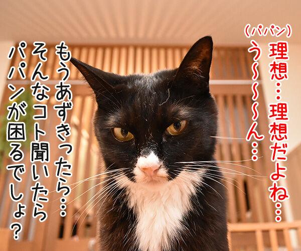 パパンの理想の猫って? 猫の写真で4コマ漫画 3コマ目ッ