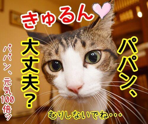 パパンが調子わるいとき 猫の写真で4コマ漫画 4コマ目ッ