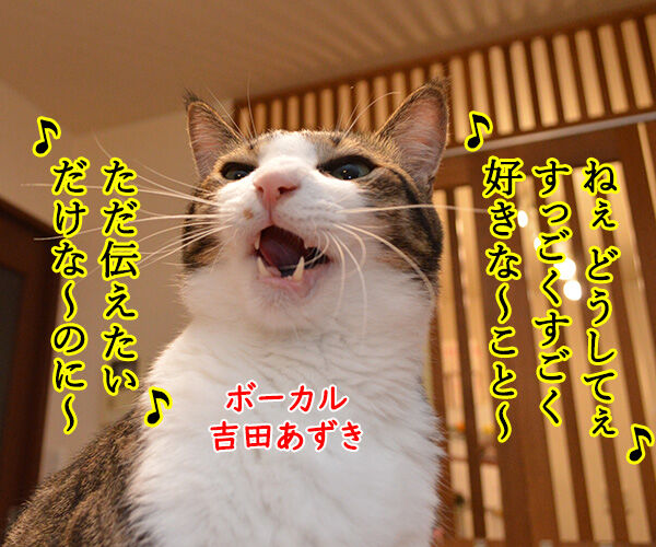 LOVE LOVE LOVE 猫の写真で4コマ漫画 1コマ目ッ