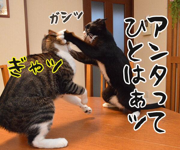 アンタってひとは 猫の写真で4コマ漫画 1コマ目ッ