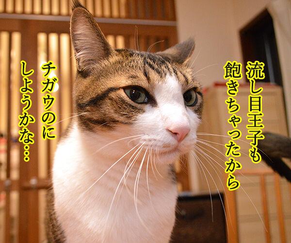 流し目王子に飽きちゃったから 猫の写真で4コマ漫画 2コマ目ッ