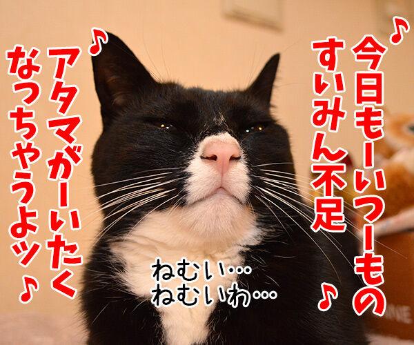 すいみん不足 猫の写真で4コマ漫画 1コマ目ッ