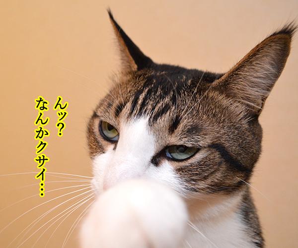 おなかがギュルッ 猫の写真で4コマ漫画 3コマ目ッ