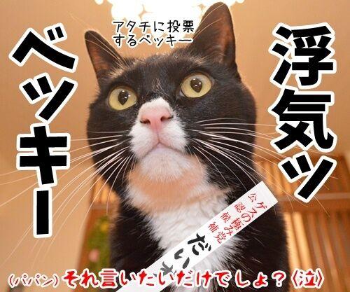 あずだいは参院選に立候補しますッ 猫の写真で4コマ漫画 4コマ目ッ