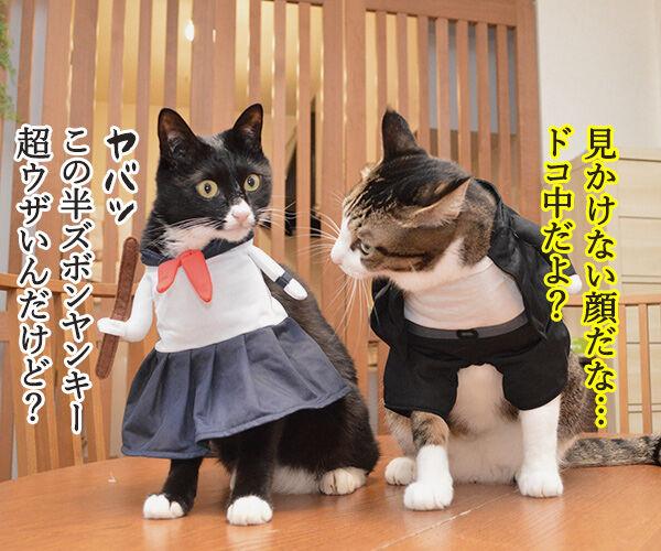 ヤンキーあずきとスケバンだいず 猫の写真で4コマ漫画 1コマ目ッ
