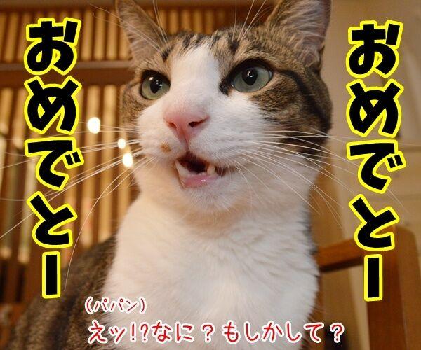 今日は父の日だもんねッ 猫の写真で4コマ漫画 1コマ目ッ