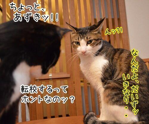 突然の別れ 猫の写真で4コマ漫画 1コマ目ッ
