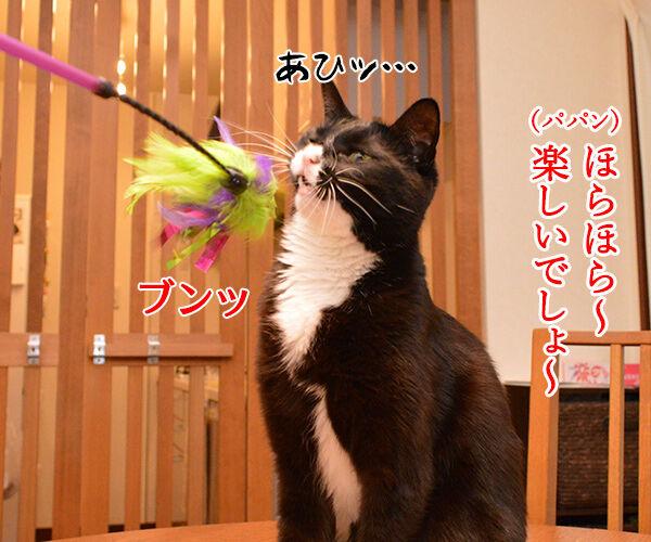 きょうは5月7日だから 猫の写真で4コマ漫画 2コマ目ッ