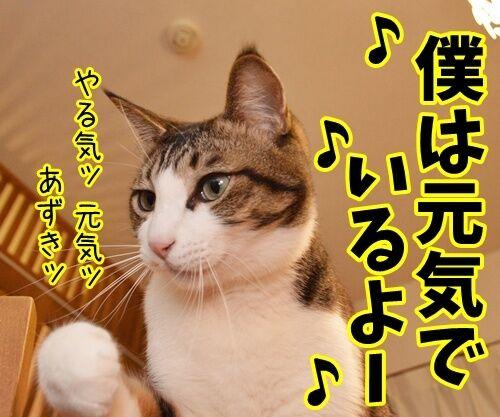 天体観測 其の二 猫の写真で4コマ漫画 1コマ目ッ