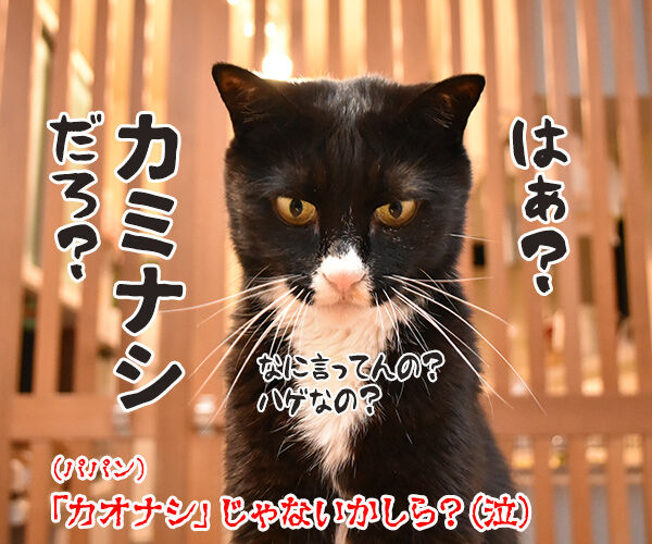 『千と千尋の神隠し』ごっこするよーッ 猫の写真で4コマ漫画 4コマ目ッ