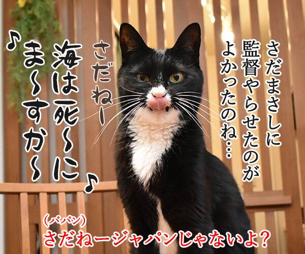 カーリング女子がメダル獲得なのッ 猫の写真で4コマ漫画 2コマ目ッ