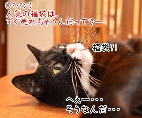 お正月といえば福袋 猫の写真で4コマ漫画 1コマ目ッ