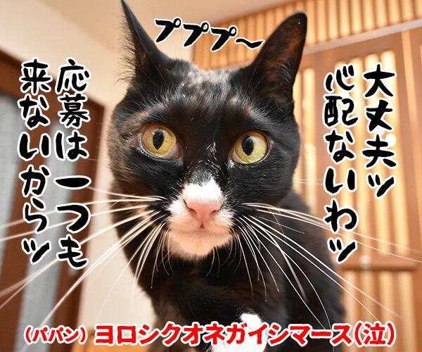 『あずだいを拡散してくれたら 年賀状を送っちゃうわよー キャンペーン』応募してねーッ 猫の写真で4コマ漫画 4コマ目ッ