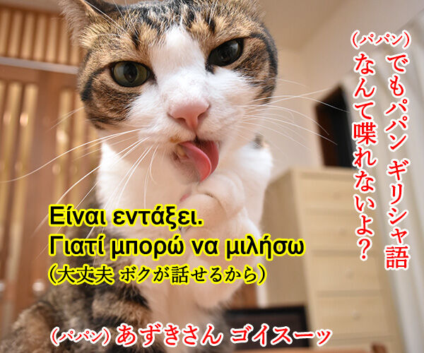 エーゲ海に浮かぶ島 シロス島の猫のお世話係を募集中なのッ 猫の写真で4コマ漫画 2コマ目ッ