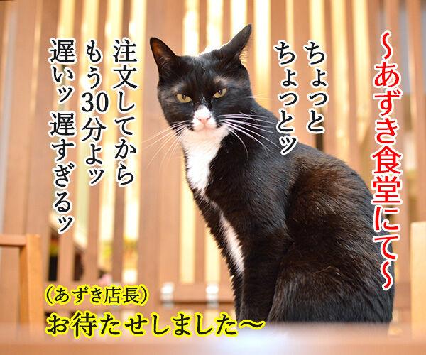 あずき食堂にて 猫の写真で4コマ漫画 1コマ目ッ
