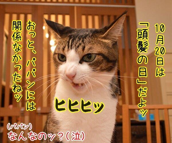 10月20日きょうは何の日? 猫の写真で4コマ漫画 2コマ目ッ