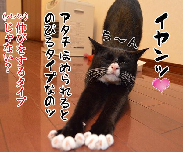 アタチ、ほめられるとのびるタイプなの 猫の写真で4コマ漫画 3コマ目ッ