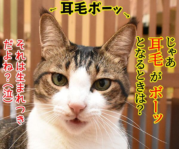 猫のピーン!はどんなきもちかしら? 猫の写真で4コマ漫画 4コマ目ッ