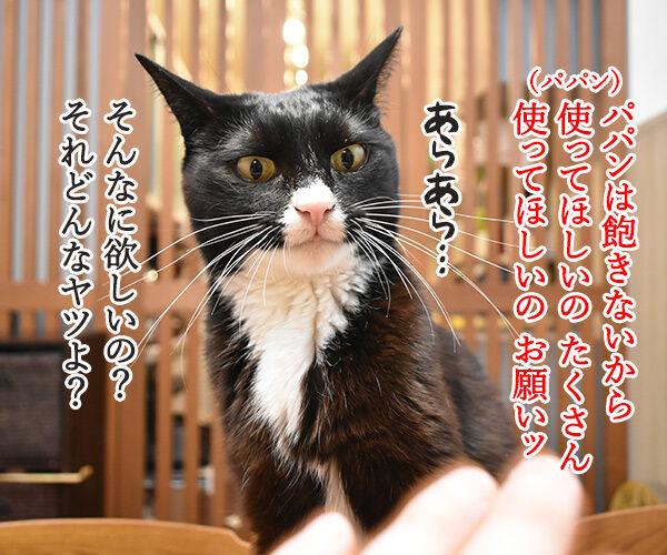 どうしても使ってほしいじゃらしがあるのッ 猫の写真で4コマ漫画 3コマ目ッ