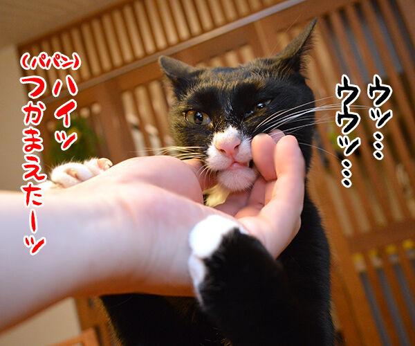 パパンのオヤツを食べちゃったからオ・シ・オ・キ❤︎ 猫の写真で4コマ漫画 2コマ目ッ