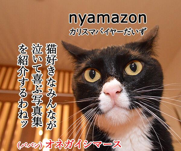 猫好きが泣いて喜ぶ写真集をご紹介ッ 猫の写真で4コマ漫画 1コマ目ッ