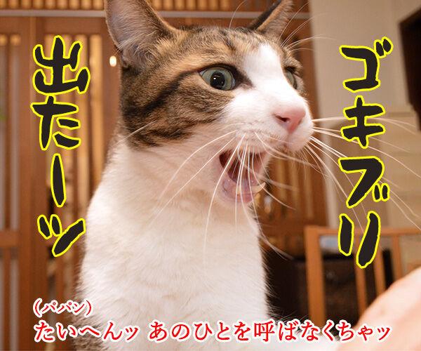 ゴキブリが出たらあのヒトを呼ぶのよッ 猫の写真で4コマ漫画 1コマ目ッ