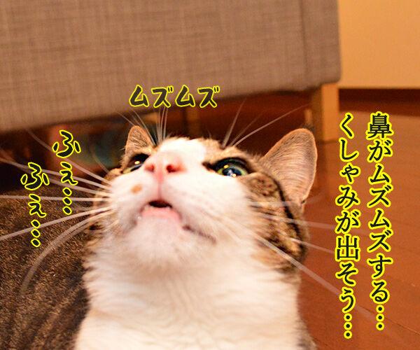 くしゃみが出そう 猫の写真で4コマ漫画 1コマ目ッ
