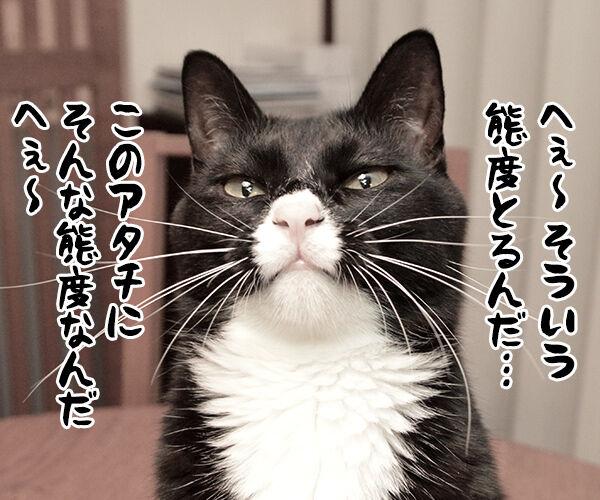 疑惑 其の三 猫の写真で4コマ漫画 3コマ目ッ