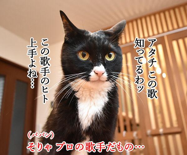 ある演歌歌手のはなし 猫の写真で4コマ漫画 2コマ目ッ
