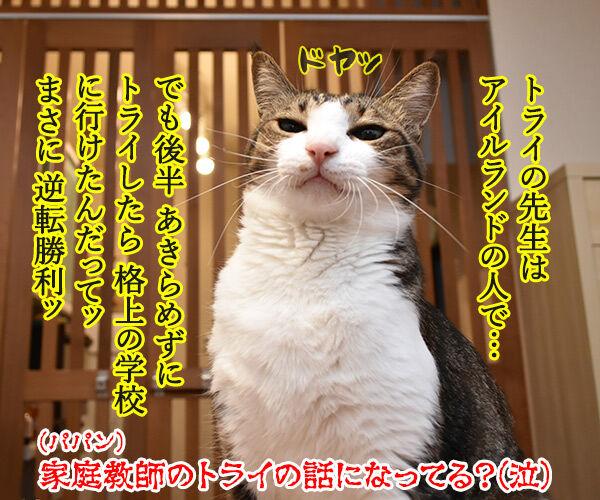 ラグビーワールドカップ日本代表がアイルランドに歴史的勝利なのッ 猫の写真で4コマ漫画 4コマ目ッ