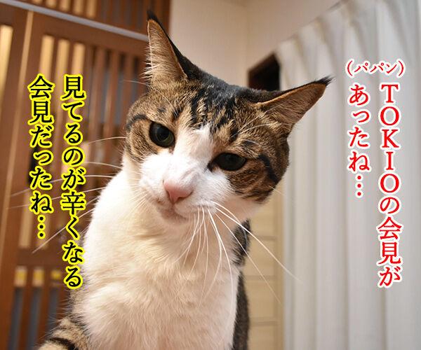 ボクたちは4人のTOKIOを応援しますッ 猫の写真で4コマ漫画 1コマ目ッ