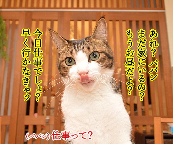 大晦日のできごと 猫の写真で4コマ漫画 1コマ目ッ
