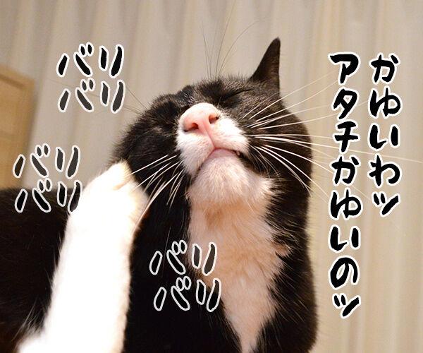 アタチ かゆいのッ 猫の写真で4コマ漫画 1コマ目ッ