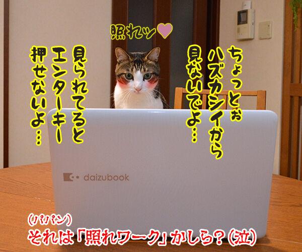 テレワークって最近よく聞くわよねッ 猫の写真で4コマ漫画 4コマ目ッ