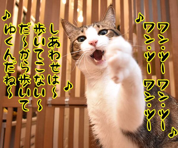 ワン・ツー ワン・ツー しあわせは歩いてこないのよッ 猫の写真で4コマ漫画 1コマ目ッ