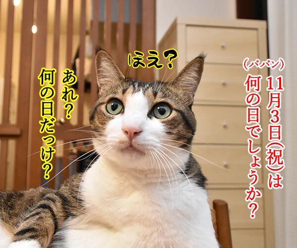 11月3日は文化の日なのよッ 猫の写真で4コマ漫画 1コマ目ッ