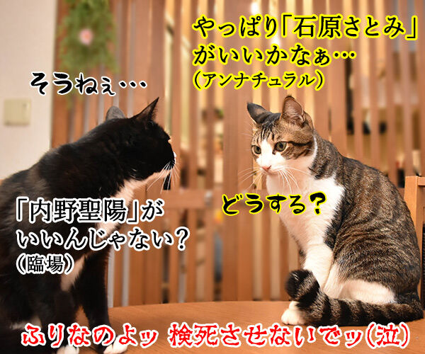 猫さんの前で死んだふりをしたら? 猫の写真で4コマ漫画 4コマ目ッ