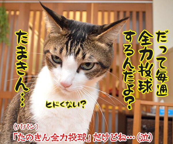 アタチがジャニーズで一番なのは…? 猫の写真で4コマ漫画 4コマ目ッ