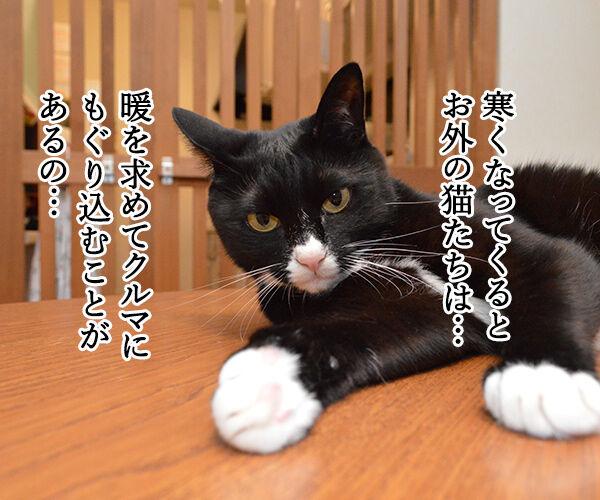 猫バンバン 猫の写真で4コマ漫画 2コマ目ッ