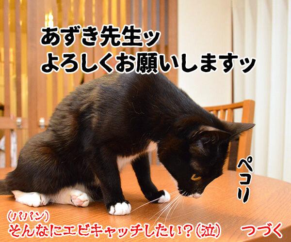 エビキャッチ 其の二 猫の写真で4コマ漫画 4コマ目ッ