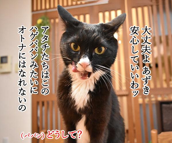 パパンみたいなオトナにはなりたくないの… 猫の写真で4コマ漫画 3コマ目ッ