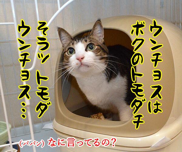 こどもの日だからウンチョスブリブリ 猫の写真で4コマ漫画 2コマ目ッ