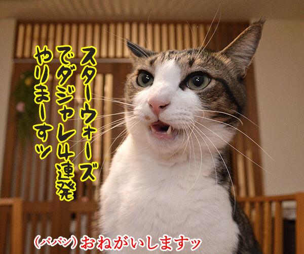 スター・ウォーズでダジャレ4連発ッ!! 猫の写真で4コマ漫画 1コマ目ッ