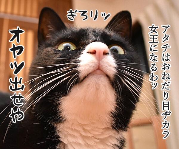 猫目ヂカラ王にッ おれはなるッ 猫の写真で4コマ漫画 2コマ目ッ