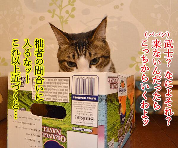 猫侍 其の一 猫の写真で4コマ漫画 2コマ目ッ
