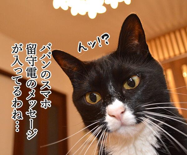 1件の新しいメッセージ 猫の写真で4コマ漫画 1コマ目ッ