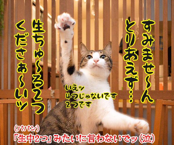 とりあえず 猫の写真で4コマ漫画 4コマ目ッ
