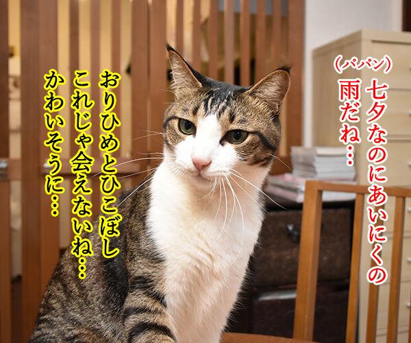 七夕なのにあいにくの雨なの… 猫の写真で4コマ漫画 1コマ目ッ